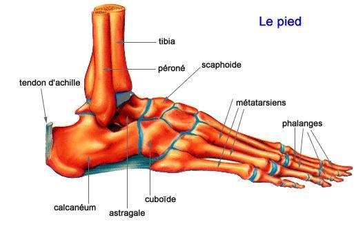 boutique de sortie meilleures chaussures guetter CHEVILLE ET PIED | Institut Chirurgie Orthopédique Nantes ...